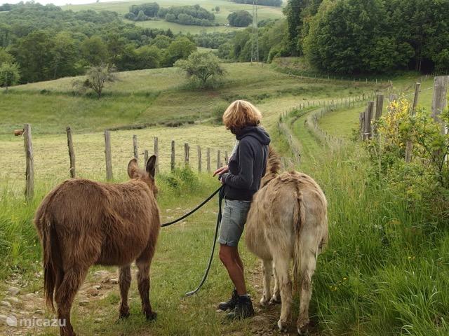 op stap met onze ezels Sjuul en Tinus