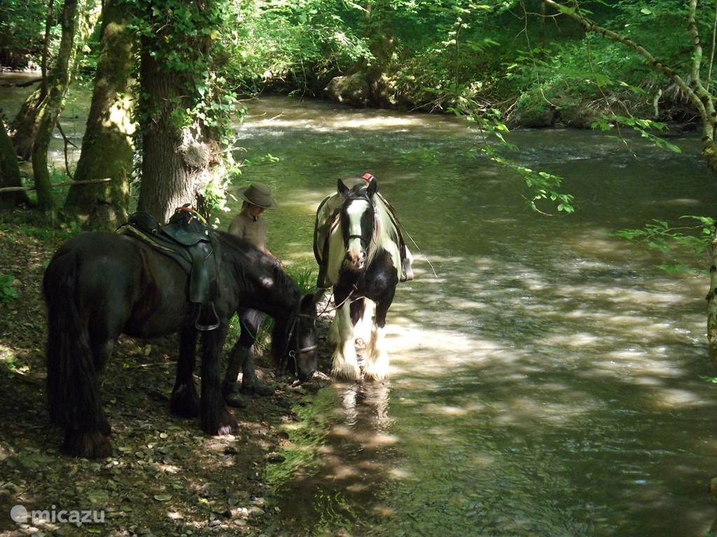 prachtige buitenritten voor ervaren ruiters met onze Ierse Tinkers/Irish Cobs