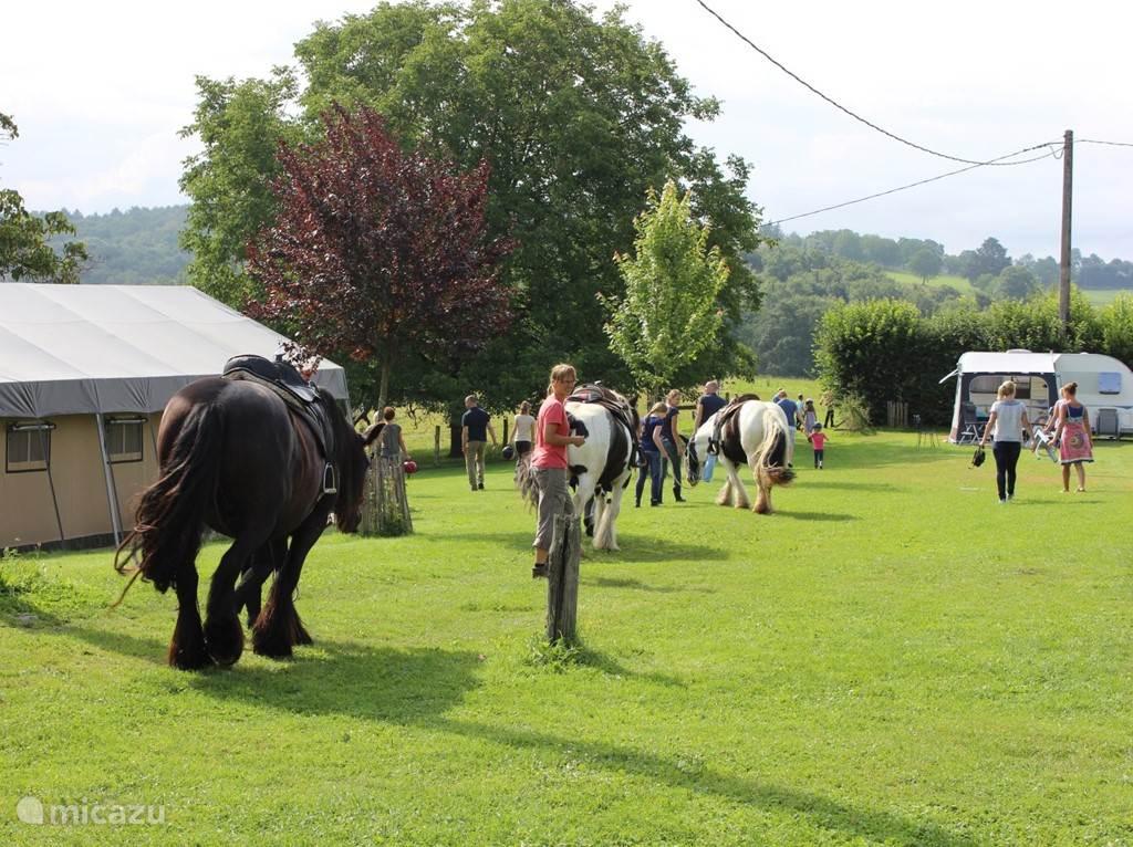in de zomer, elke maandagochtend paardijden voor alle gasten