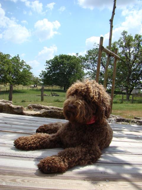 ook de honden genieten op vakantie bij Domaine la Valade