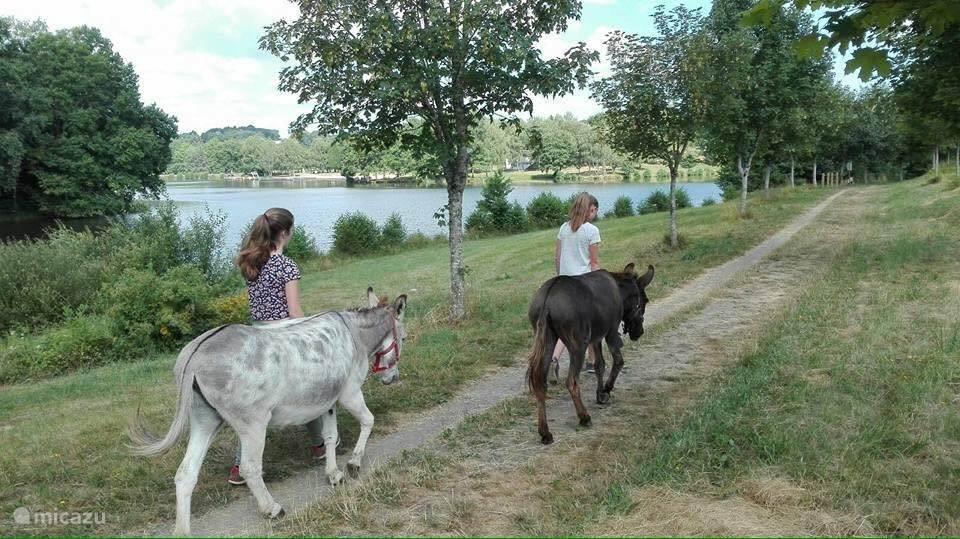 wandelen met de ezels