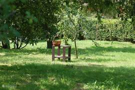 Our beautiful orchard with apples, pears, moraines, cherries, plums, marinating call, mulberries, blackberries, currants, raspberries. Every season there is something to pick.