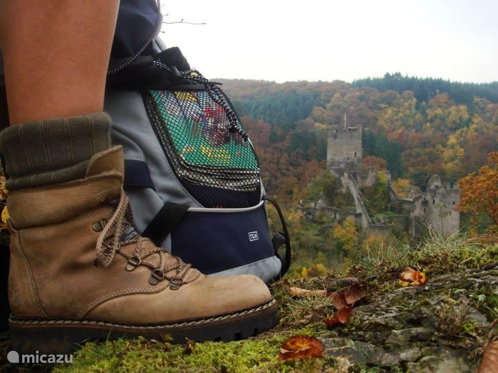Vele wandelroutes, Eifelstieg, Eifel-Mosel wandernweg