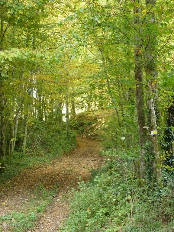 Bossen dichtbij met wandelingen paden