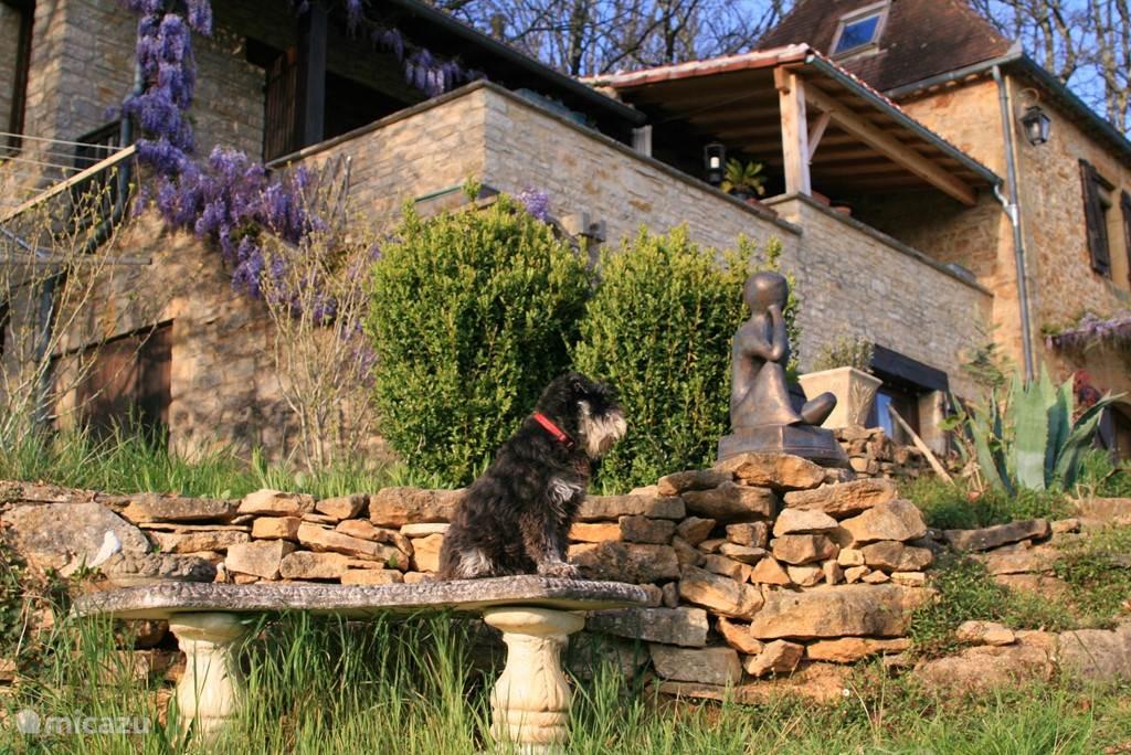 Een tuinzitje met onze Schnaus