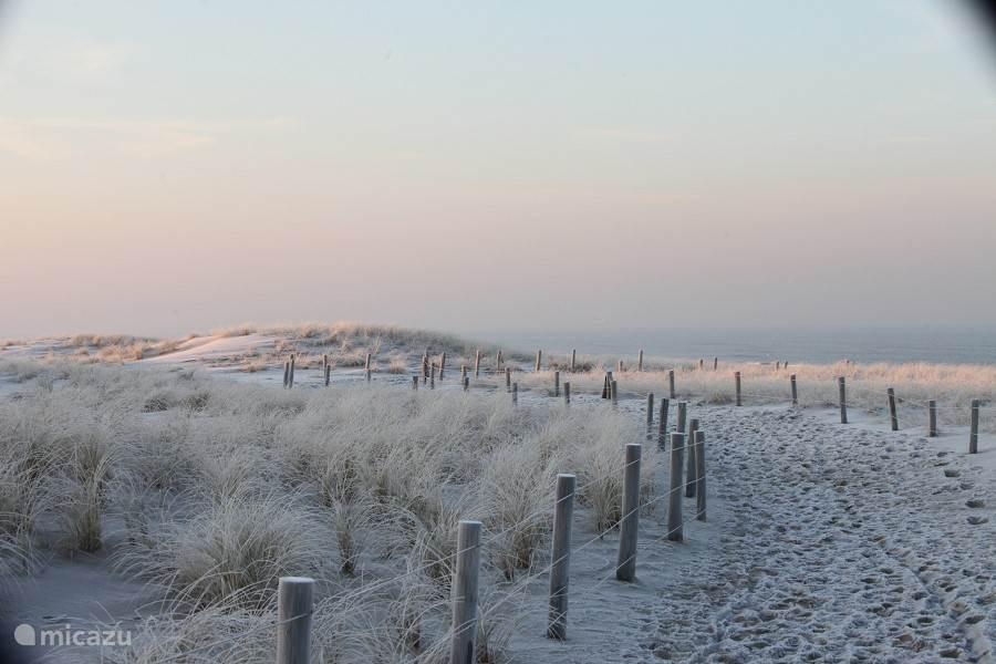 De duinen in de winter