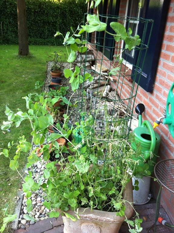 Tuin links