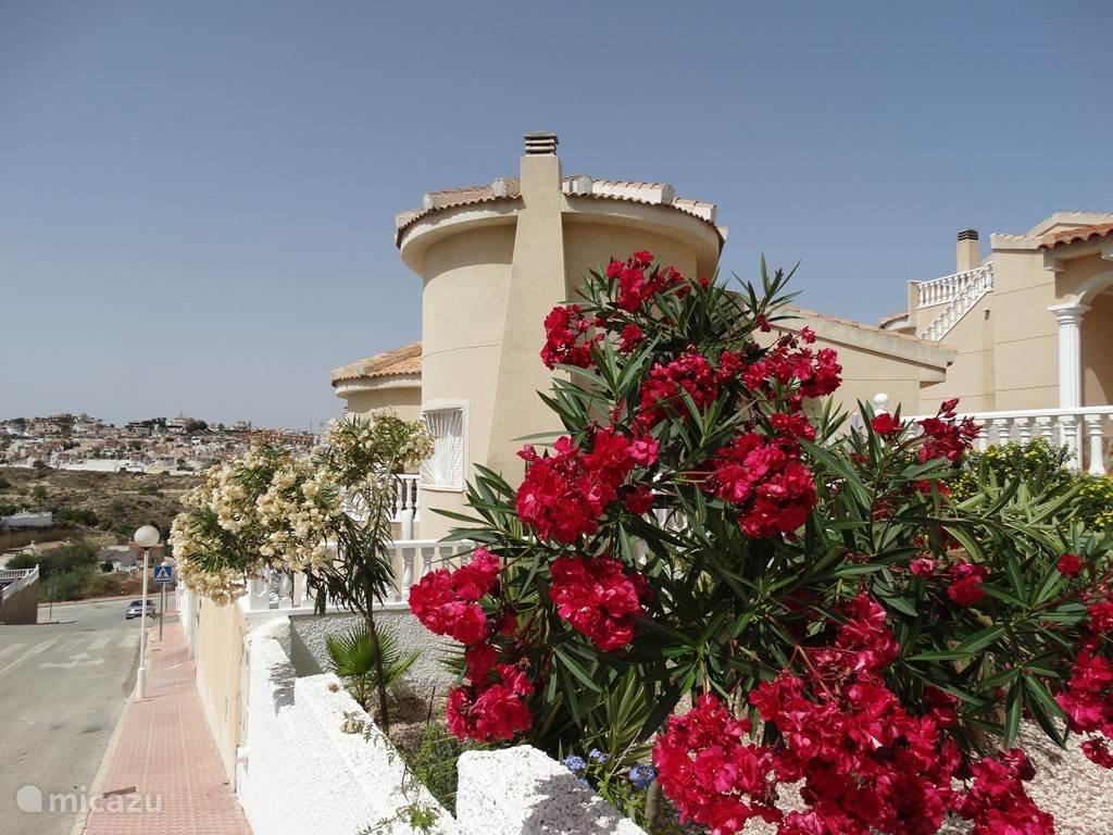 Vakantiehuis Spanje, Costa Blanca, Rojales villa Villa Nova