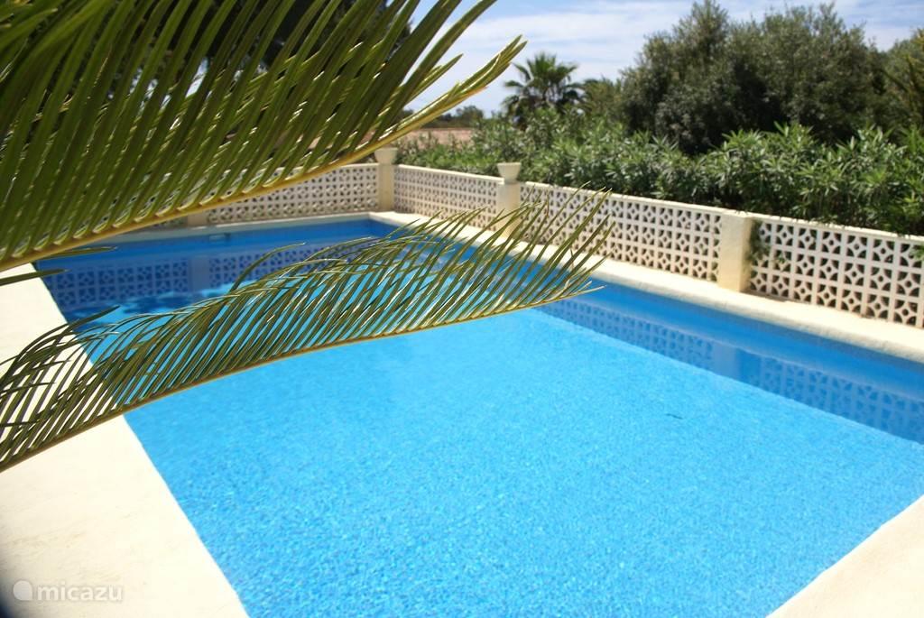 Pool 5 x 10 m