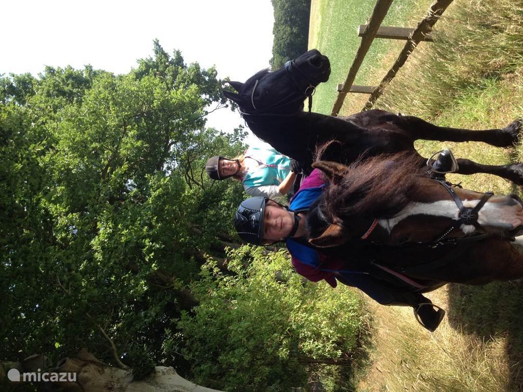 Heerlijk paardrijden in de bossen. Pensionstalling voor paard en/of pony vlakbij.