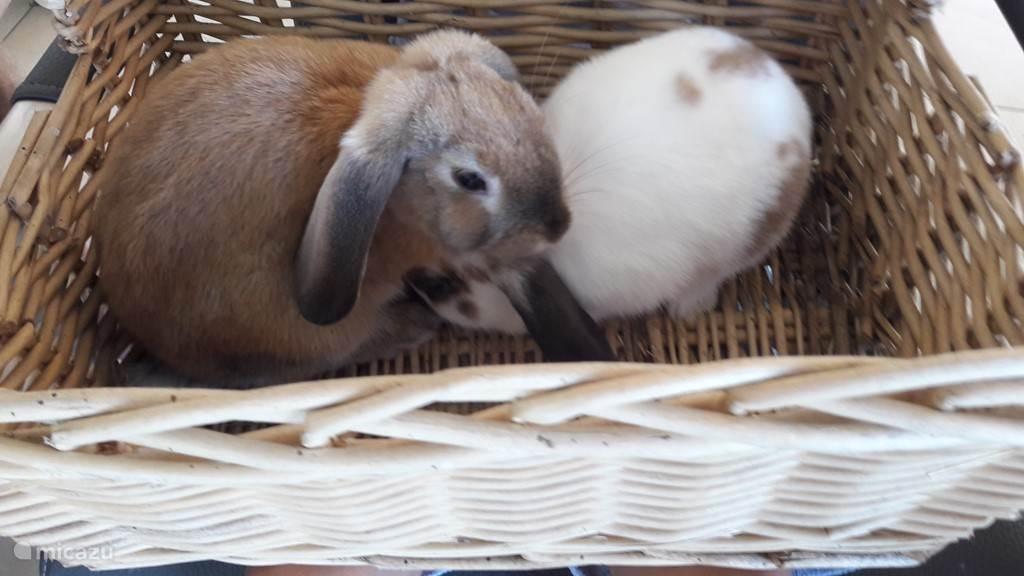 De konijntjes, heerlijk om mee te knuffelen