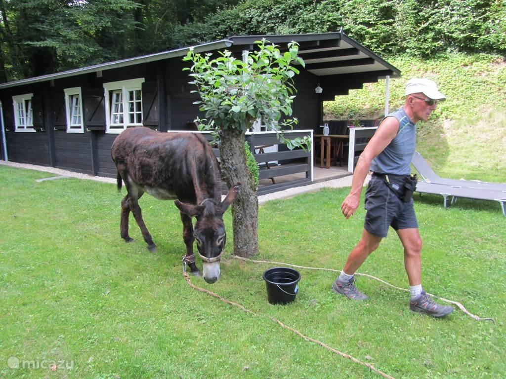wandelaars met ezel te gast