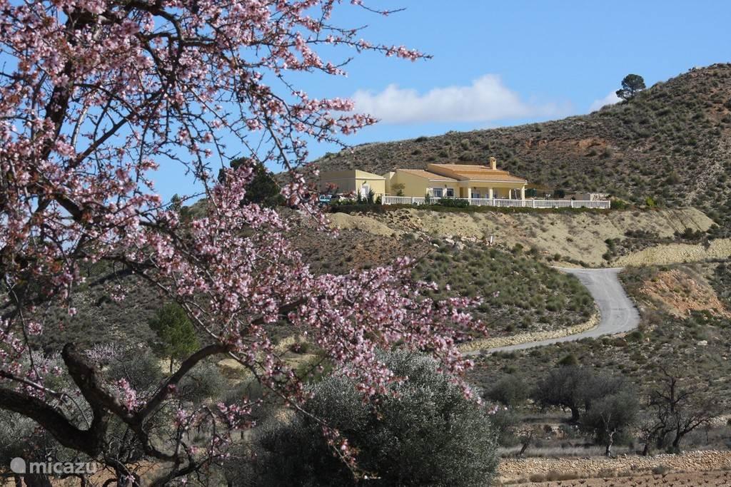 Vakantiehuis Spanje, Costa Blanca, La Canalosa Vakantiehuis Casa de la Colina