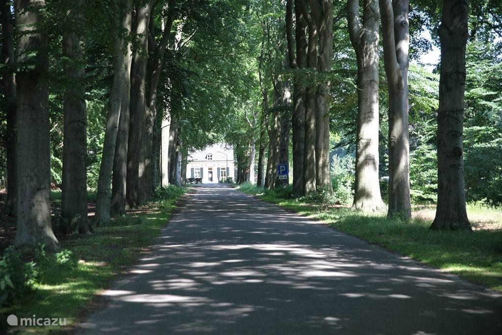 De woning is gelegen aan een prachtige lange boslaan