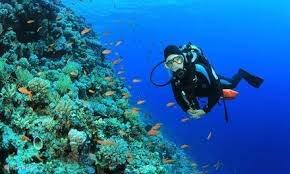 veel duikscholen in de regio