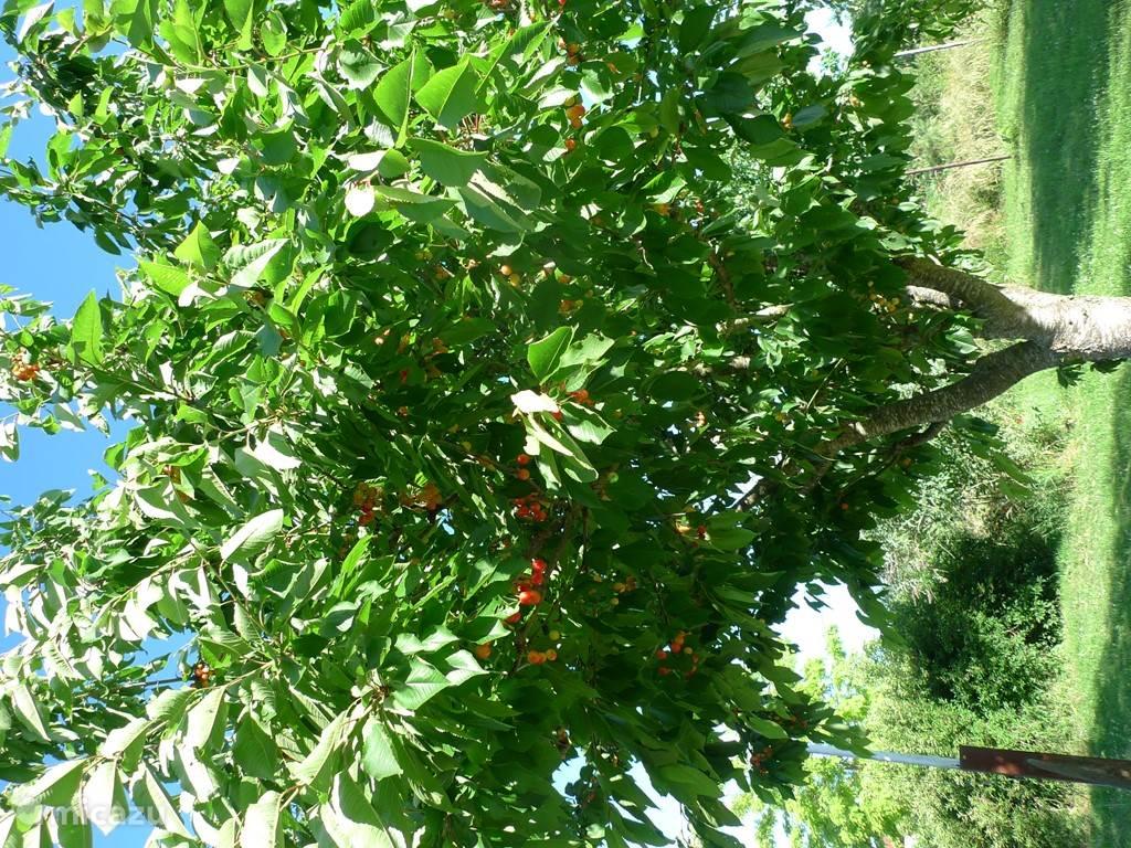 Appels, peren, pruimen, kersen, walnoten, mirabels, frambozen, bramen, rode bessen.....je mag ze allemaal komen plukken. Wel de juiste oogsttijd in de gaten houden natuurlijk.