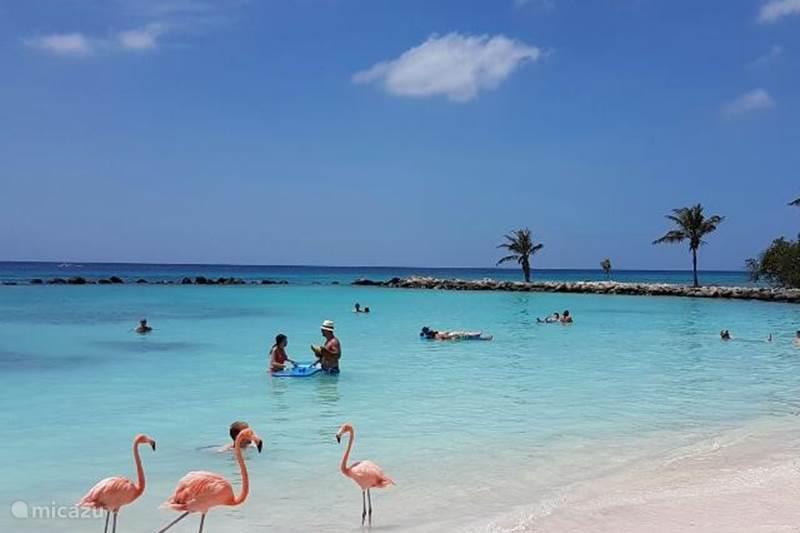 Vacation rental Aruba, Oranjestad, Oranjestad Studio NEW Lagoon Studio 5, walk to sea