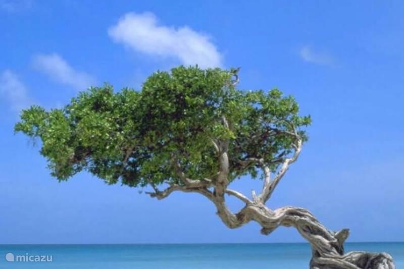 Vakantiehuis Aruba, Oranjestad, Oranjestad Studio NEW Lagoon Studio 5, lopend naar zee