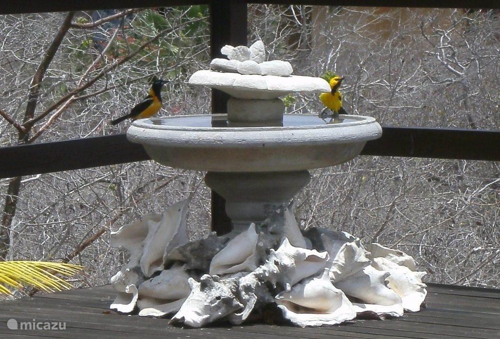 Op het terras komen prachtige vogels eten en drinken.