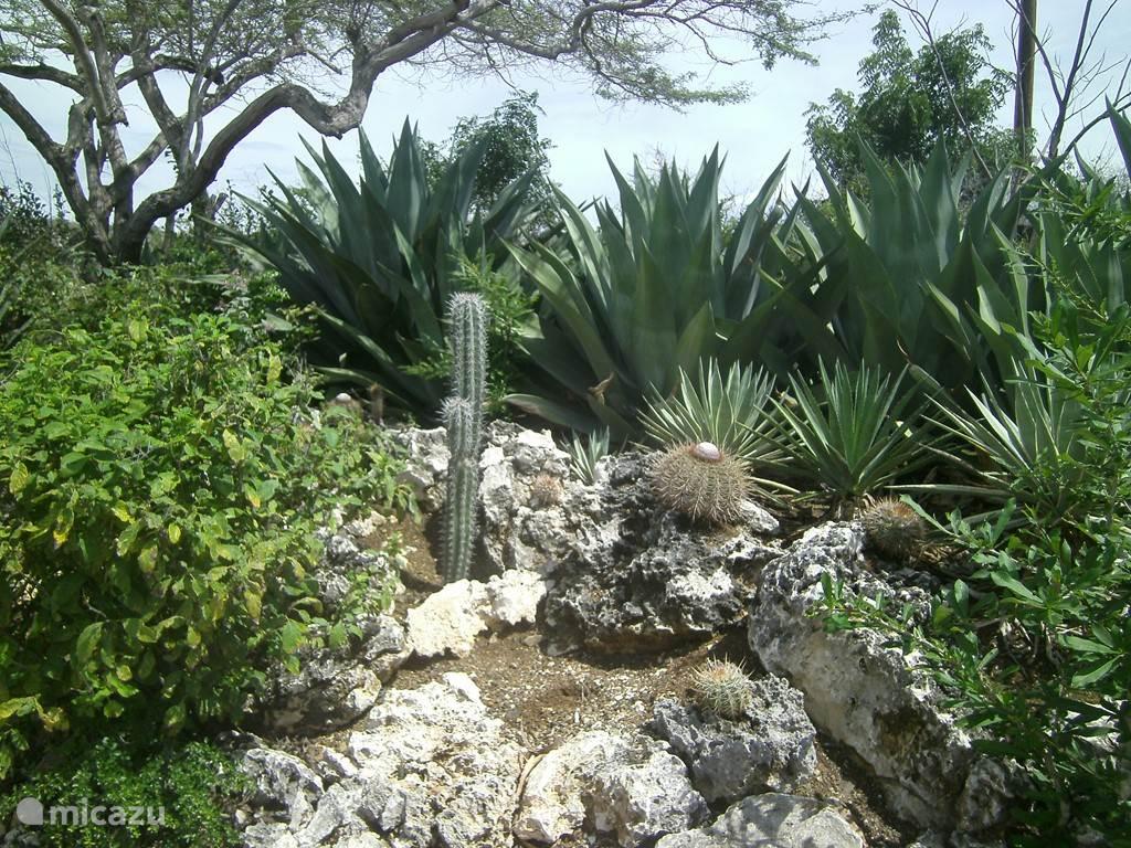 Op het grote terrein staan diverse agaven, cactussen, vetplanten en inlandse bomen en struiken.