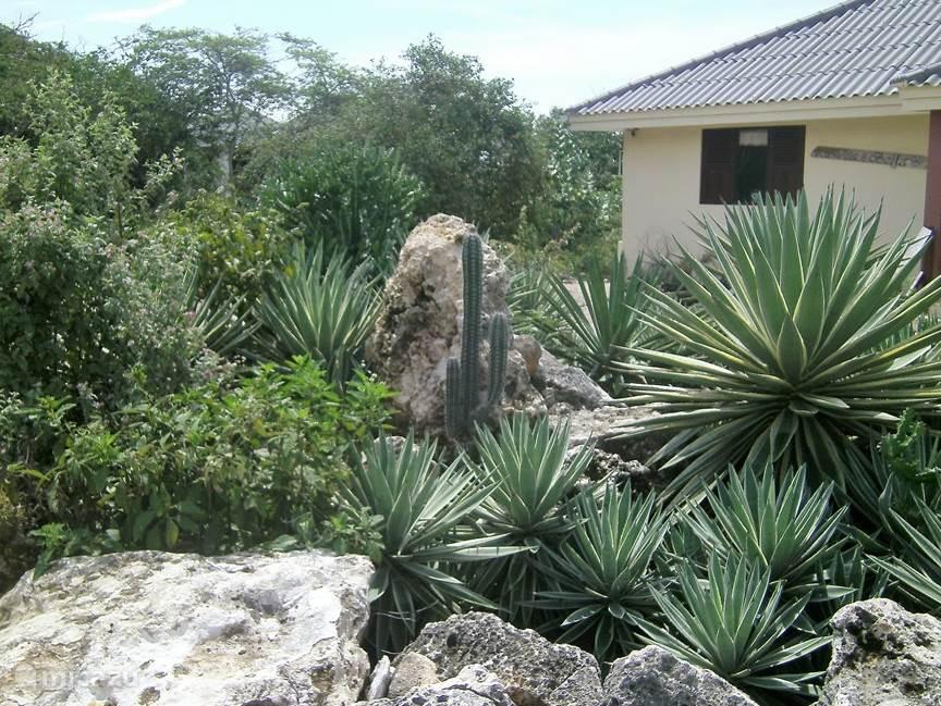 In de rotonde staan diverse cactussen en vetplanten.