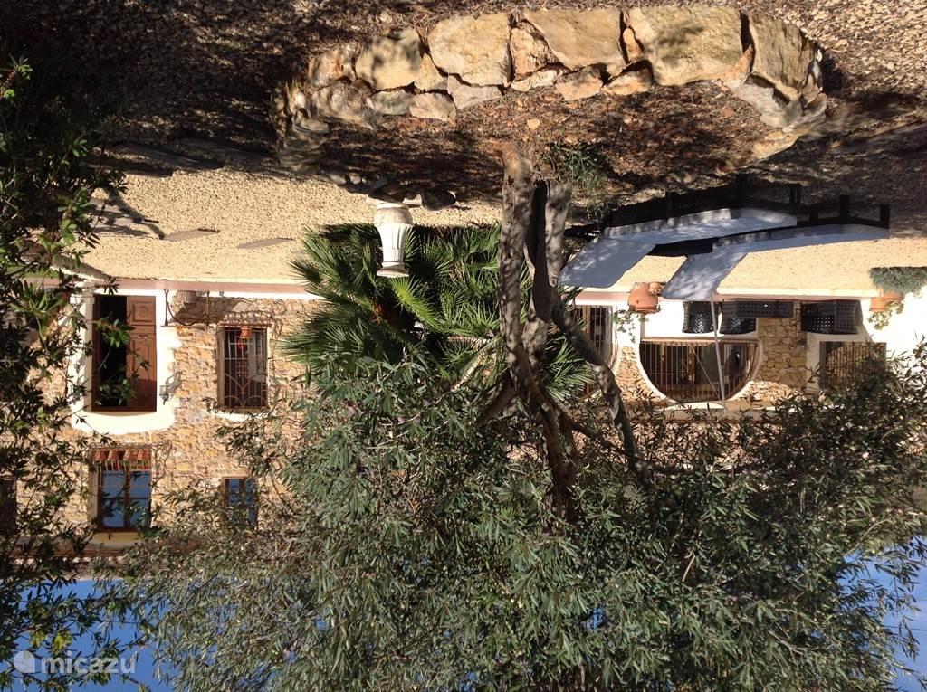 olijfboom voor de finca