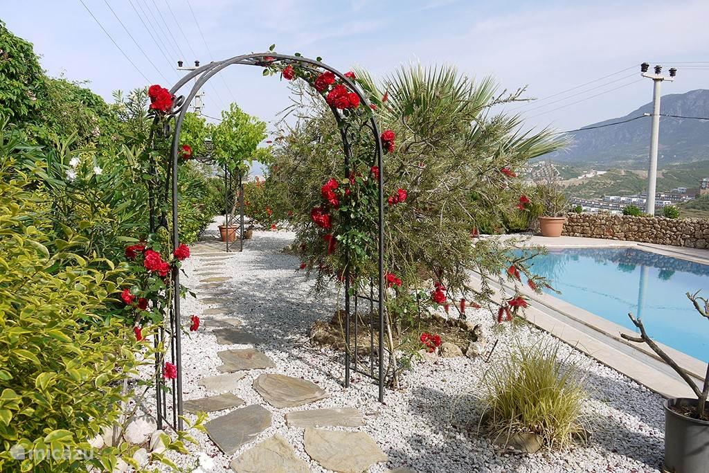 Zwembad omringd met een mooie aangelegde tuin