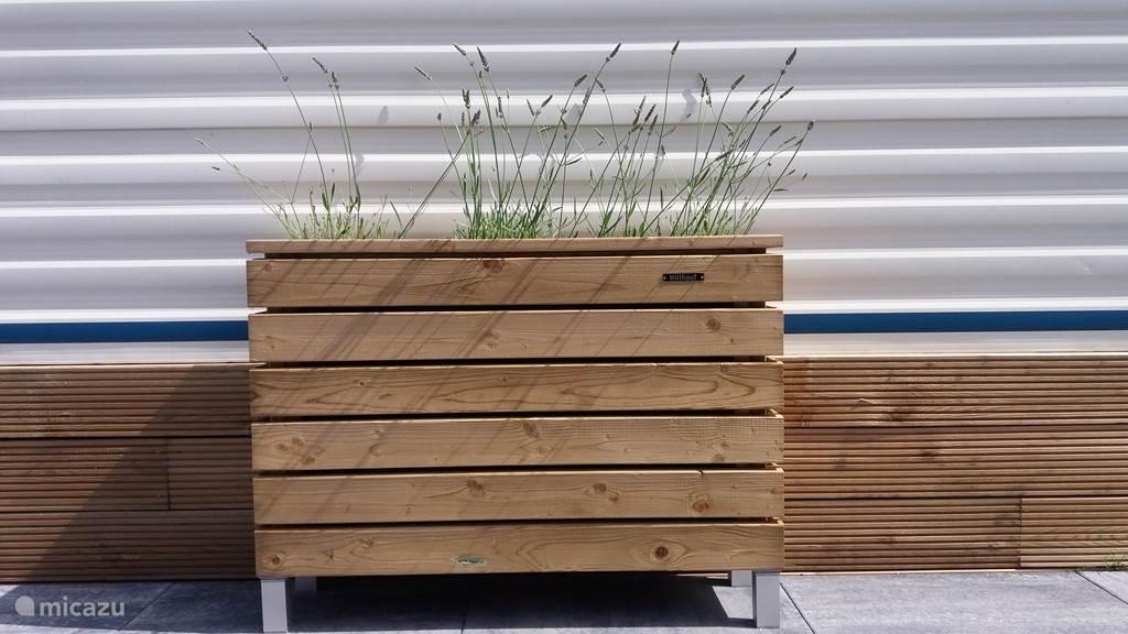Pflanzer mit duftendem Lavendel