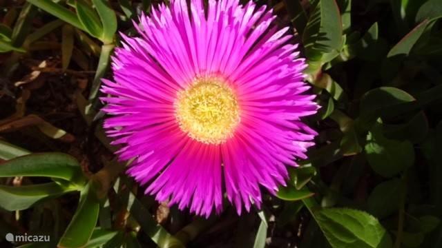 Tuin bloemen