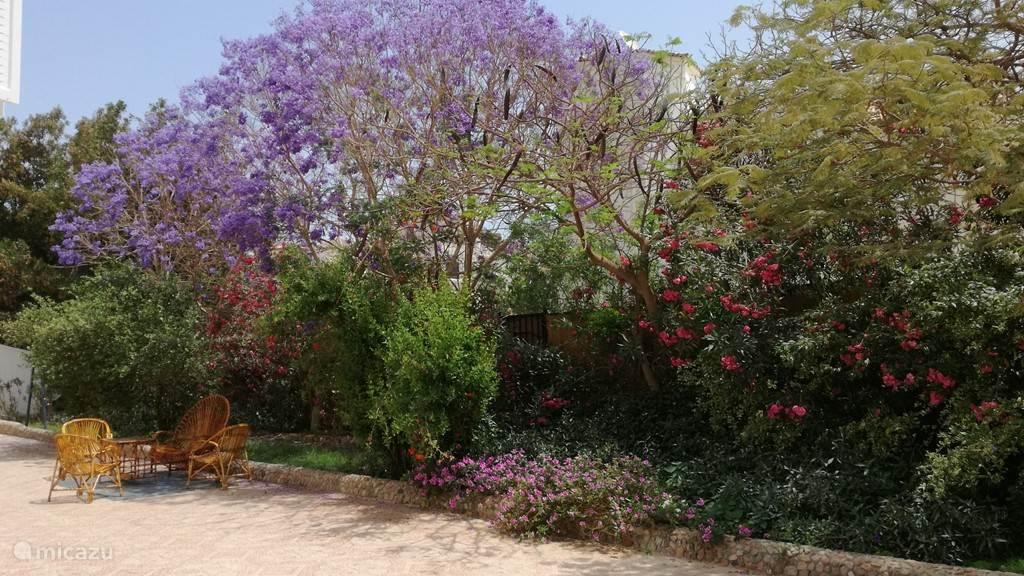 Ein Teil des Gartens hinter dem Haus