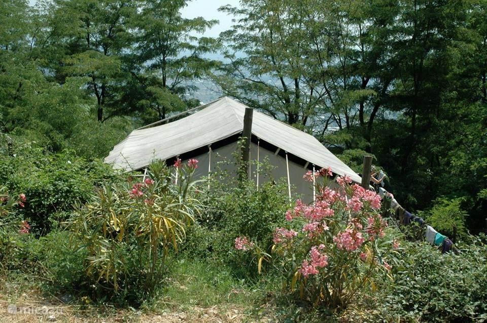 Vakantiehuis Italië, Toscane, Uzzano glamping / safaritent / yurt De Gelukkige Ezels-Safaritent Timo