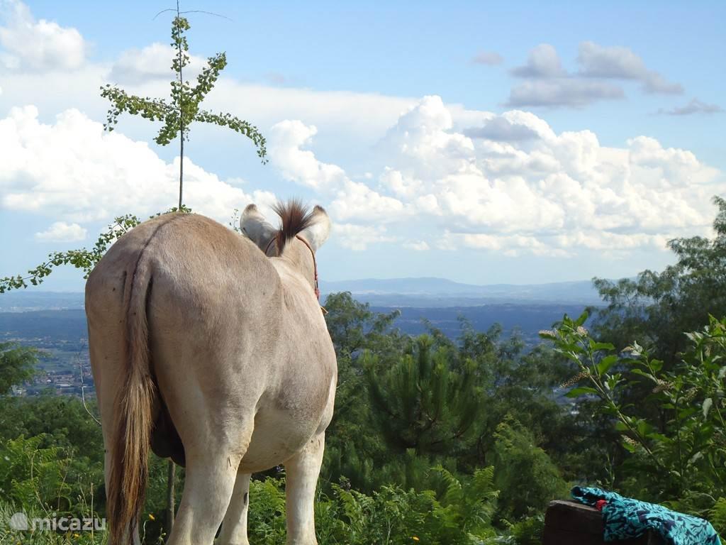 Bejamino geniet van het uitzicht.