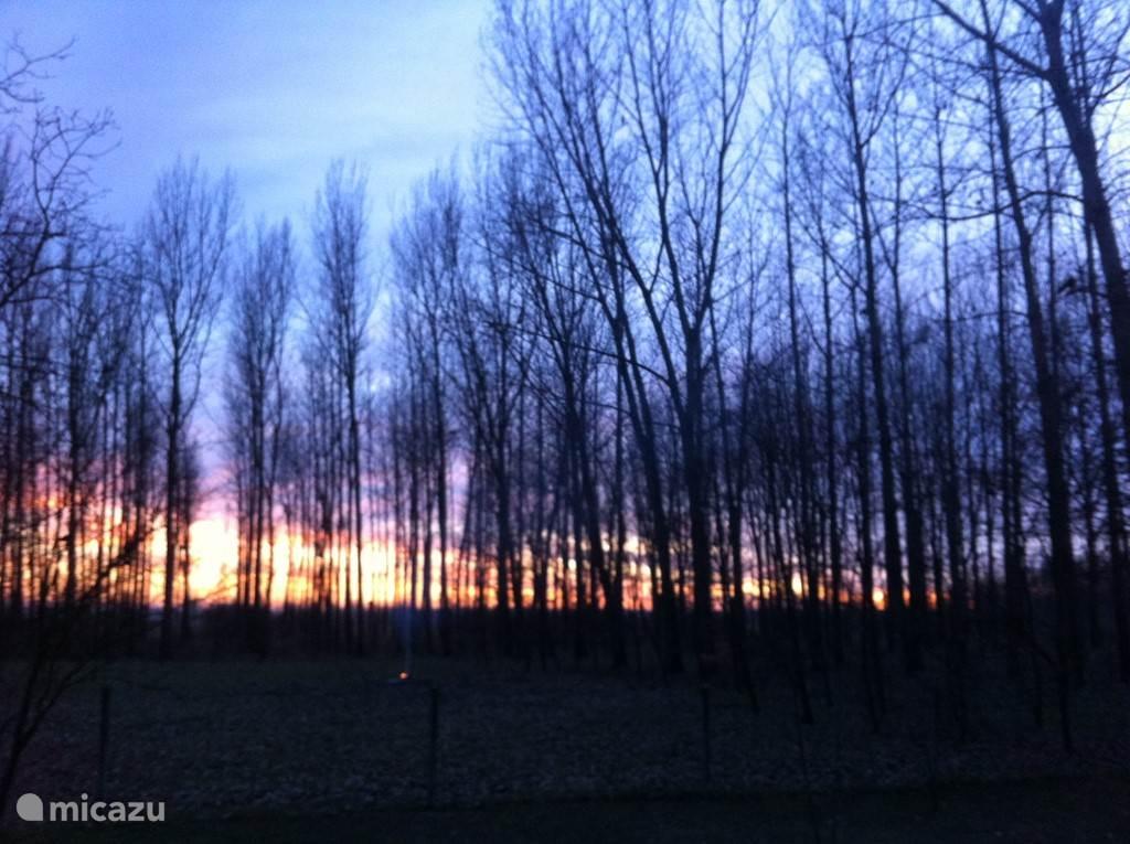 Zonsondergangen in het bos...