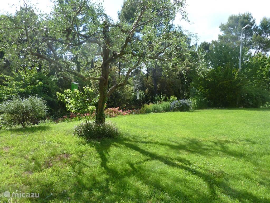 een gedeelte van de tuin met olijfboom