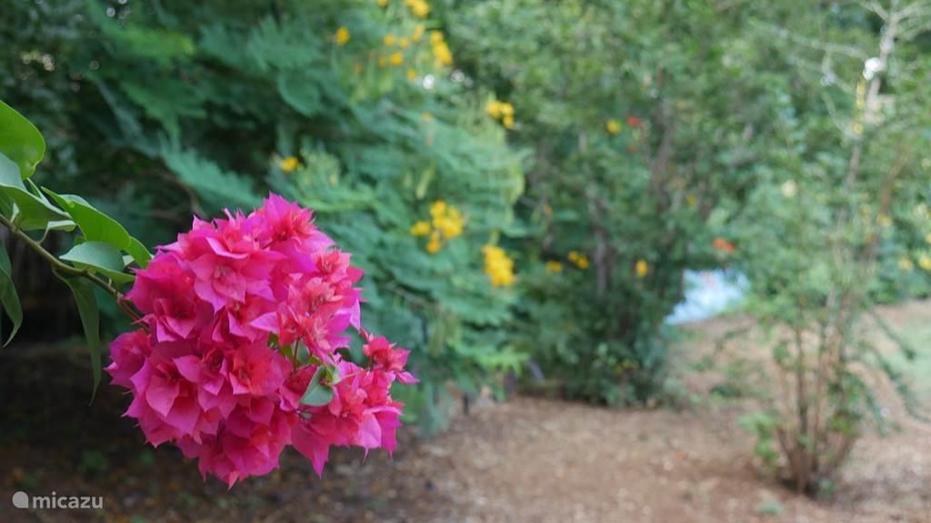 Ruimte tuin met veel planten en bloemen