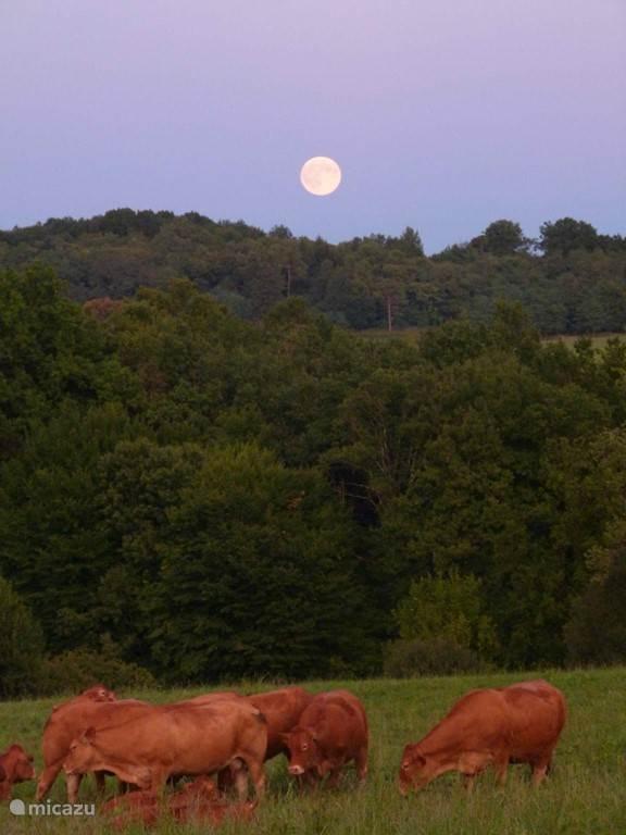 Zomeravond bij volle maan
