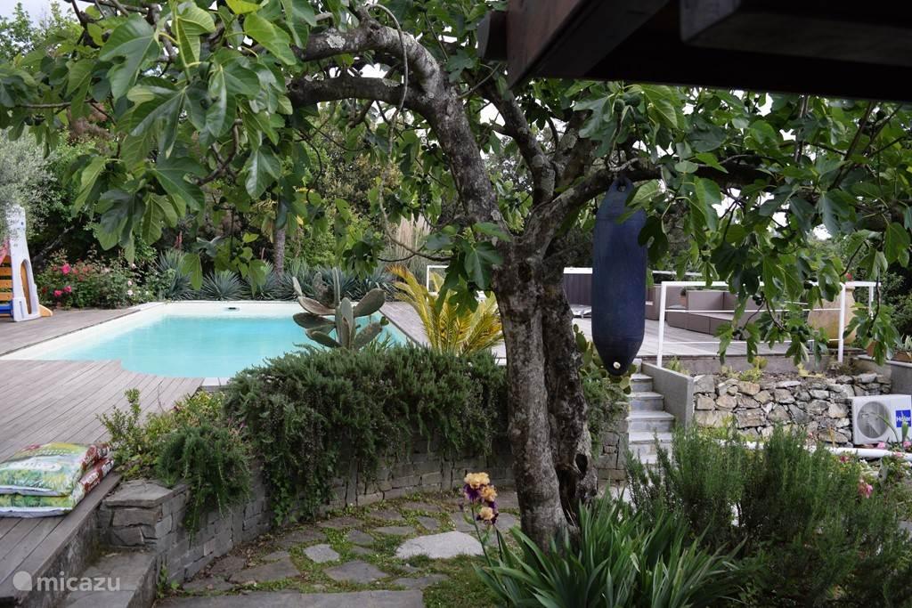 zwembad vanuit het tuinhuisje