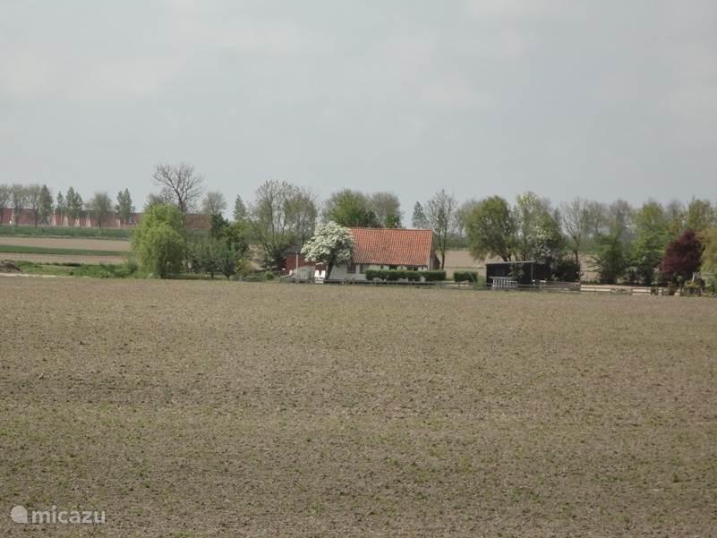 Het vakantiehuisje ligt midden in de polder