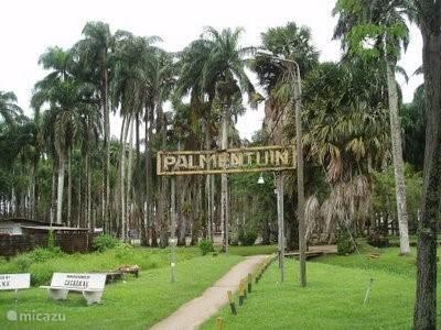 Palmentuin Paramaribo.