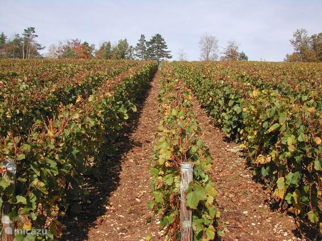 Wijngaarden, waar de beroemde Cremant de Bourgogne vandaan komt