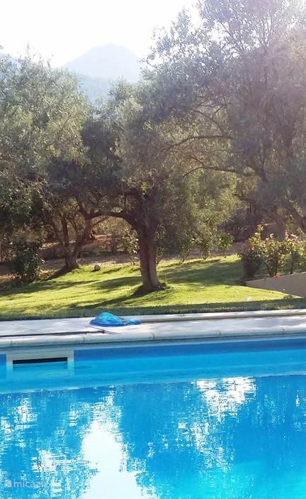 Namiddag zon in de tuin.