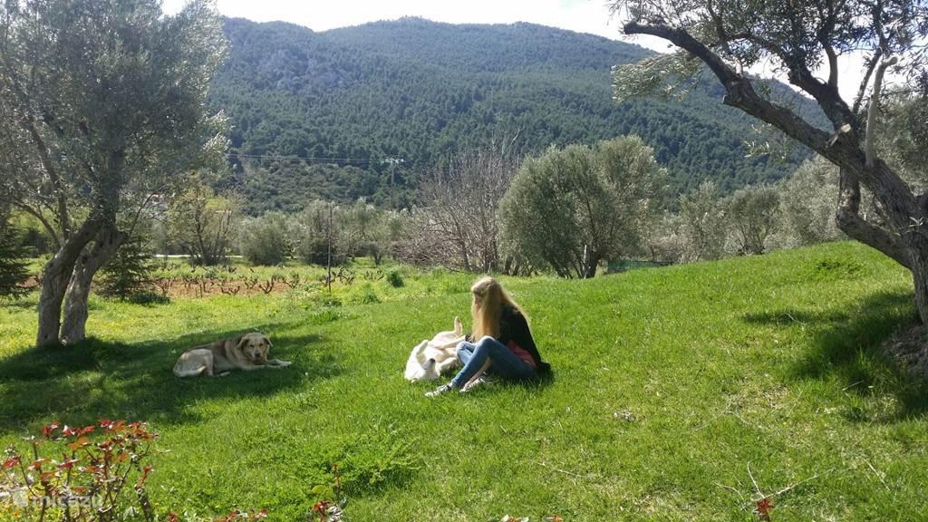 Heerlijk relaxen op het gras.