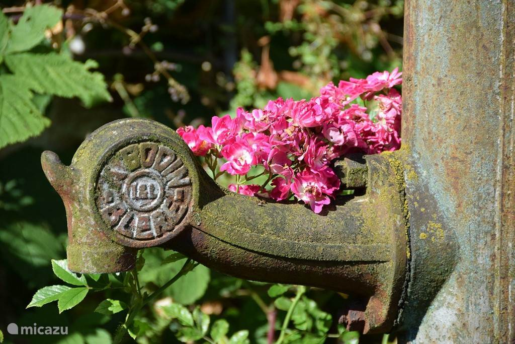 De bloemenpracht in de binnentuin.