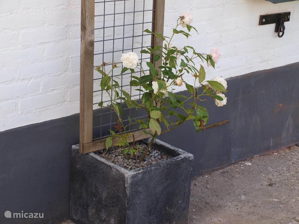De rozen, wil je er een beetje voor zorgen? Dank!