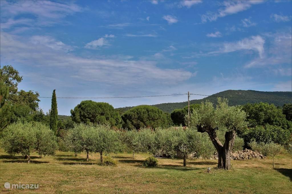 Uitzicht tuin met olijfgaard