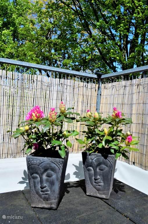De Rhododendrons staan in bloei.