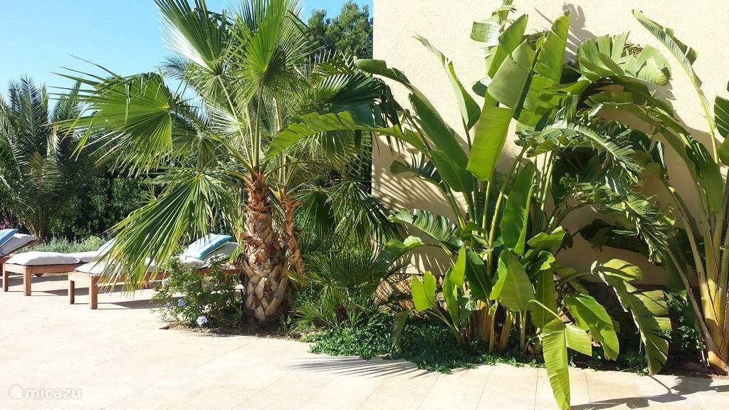 Villa TIBATI Weelderige tropische aanplanting, langs de grote zonneterrassen in natuursteen.