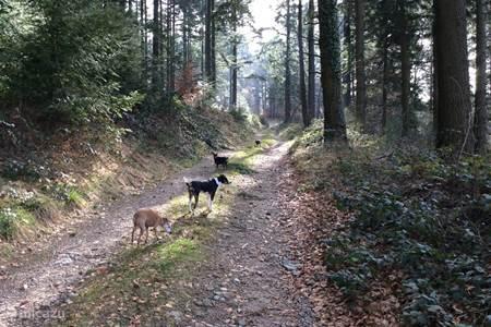 Heerlijk wandelen