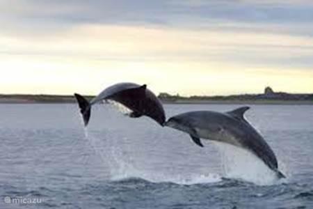 Unieke ervaringe dolfijnen spotten!