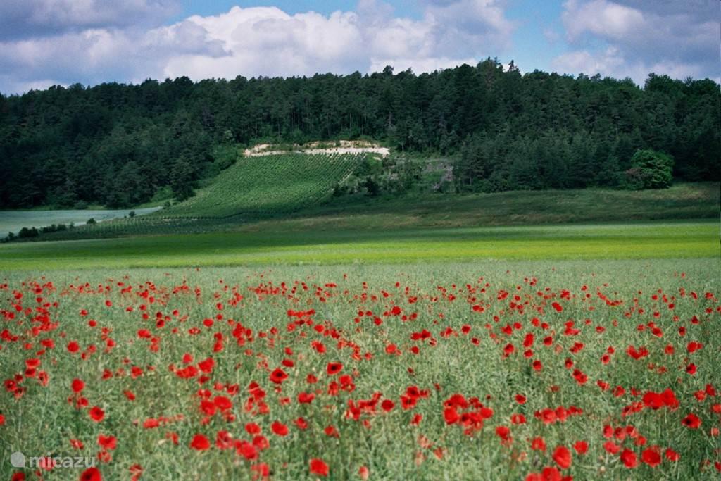 De wijngaarden met de klaprozen op de voorgrond